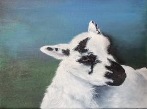Gimmer Lamb